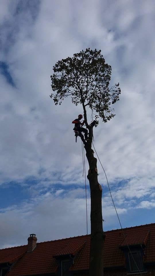 arboripaysage élagage démontage bavay